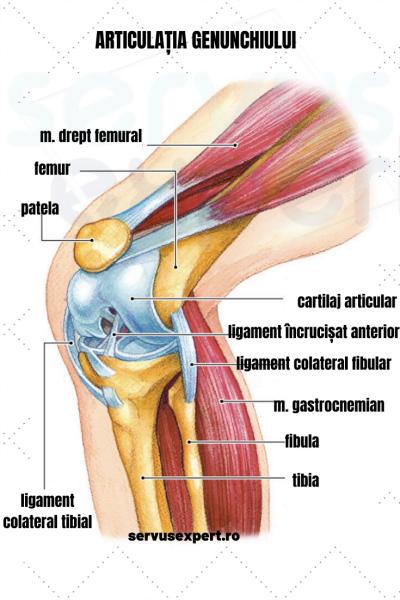 umflarea șoldului și a genunchiului
