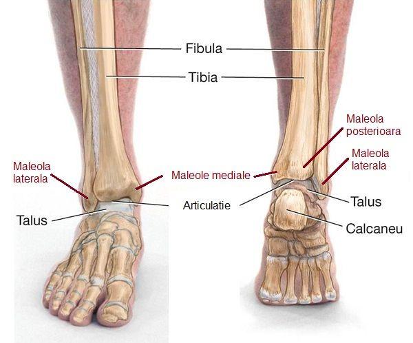 unde să tratezi articulația pe picior