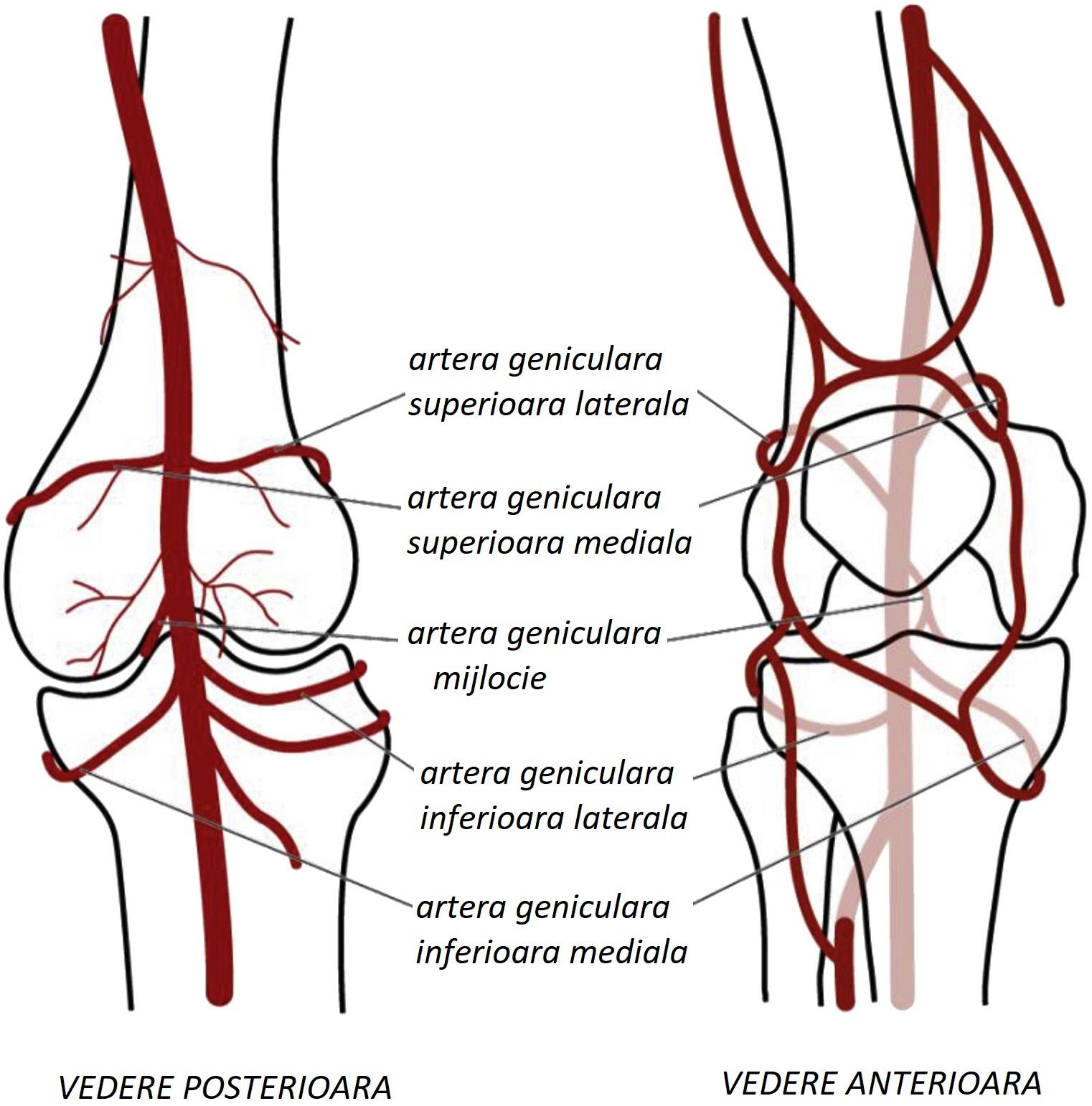cel mai bun tratament pentru articulații și ligamente