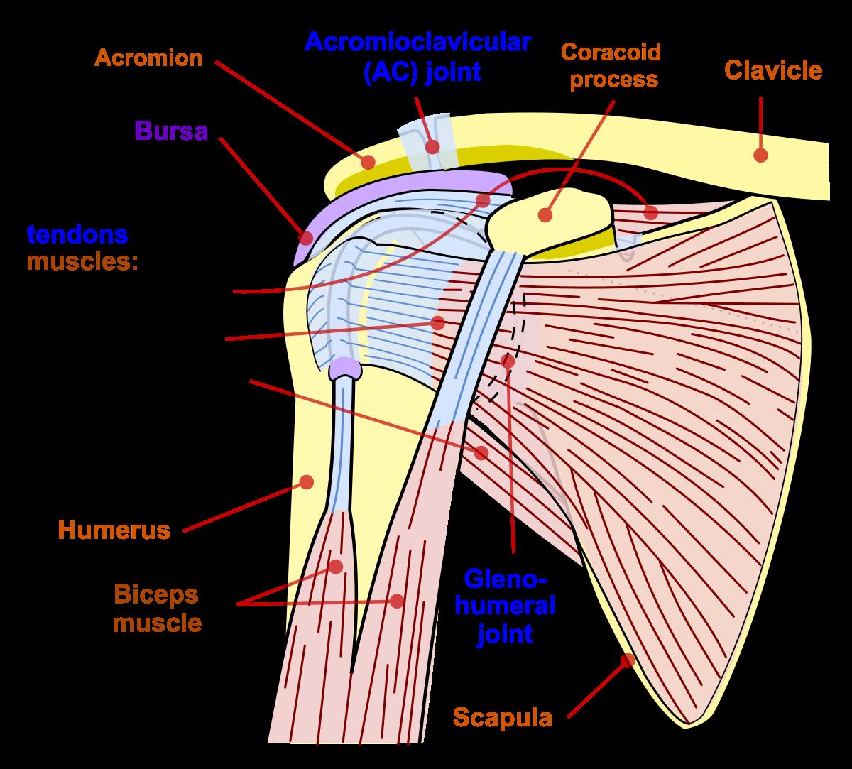 articulația umărului întors cum să tratezi forum pentru medici tratamente cu artroză