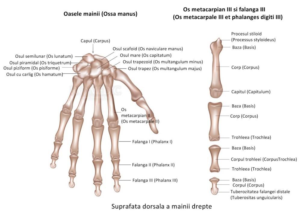 articulația degetului inelar pe braț doare