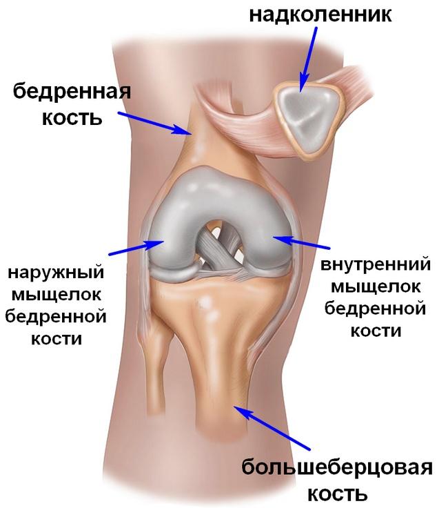 Articulațiile genunchiului latin