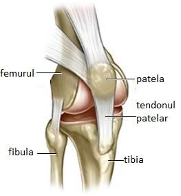 artroza filmului de poliedel al articulației genunchiului