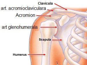 dă clic pe articulația umărului și umărul doare