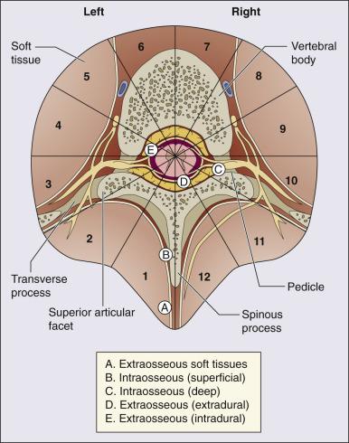 os ovarian și unguent articular)