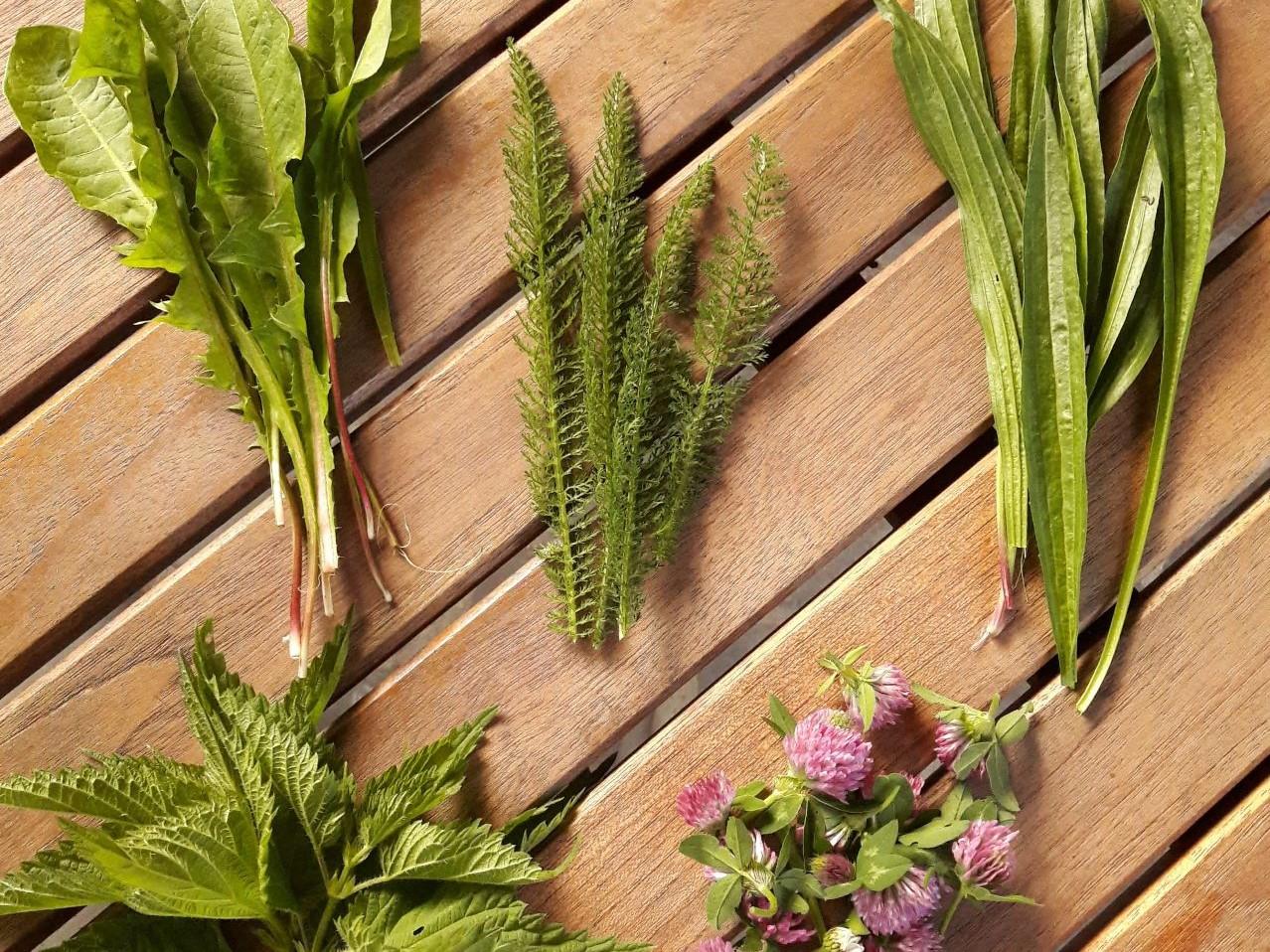 tratament articular pe bază de plante