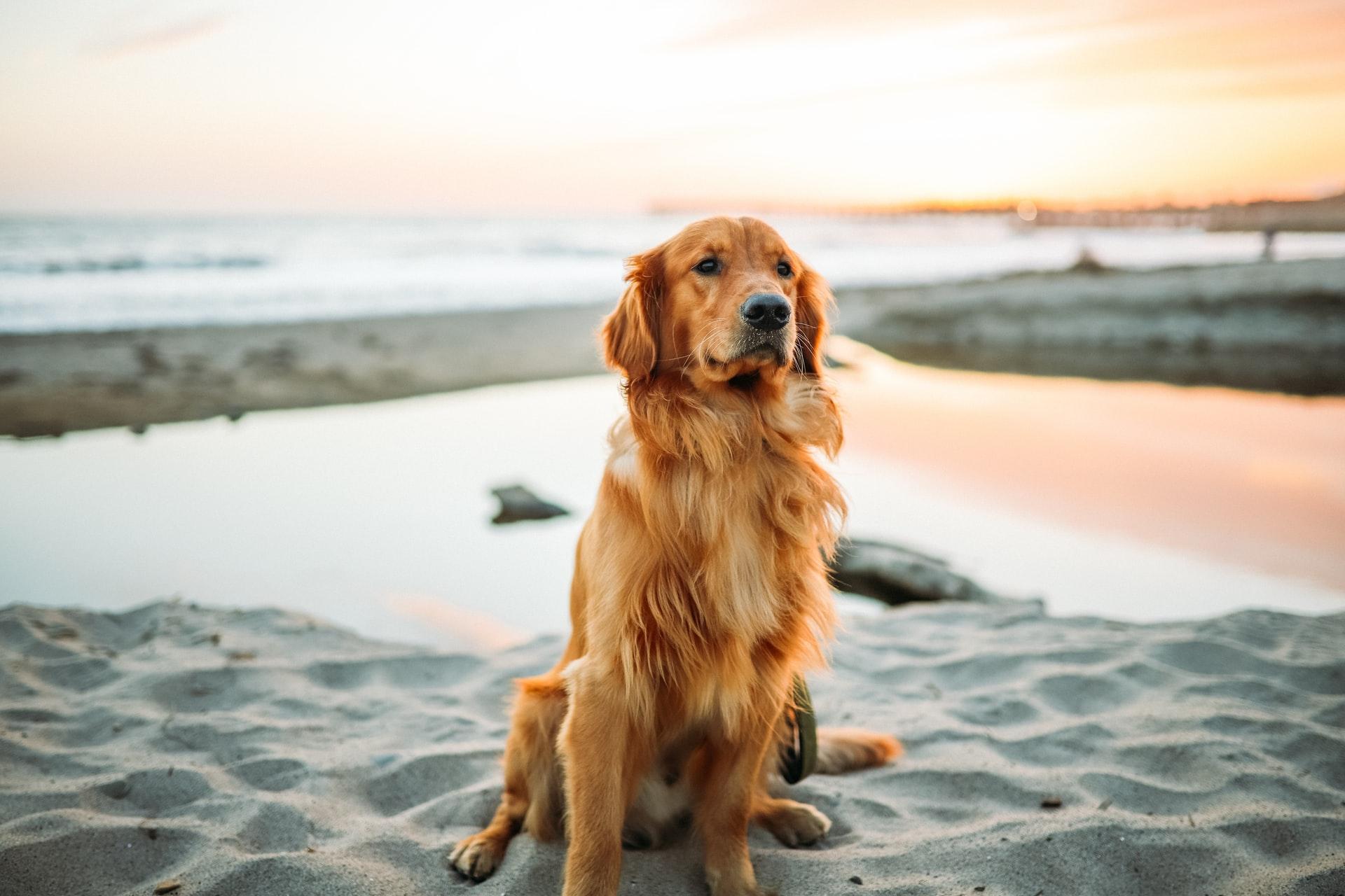 Unguent veterinar pentru articulații